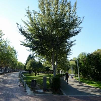 1994: S'inaugura el Parc Central