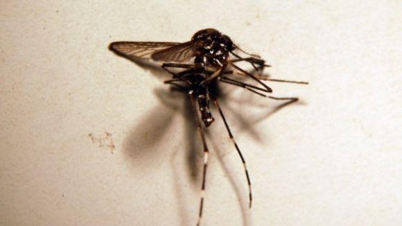 Una 'app' per a mòbils i tauletes proposa controlar la població de mosquit tigre