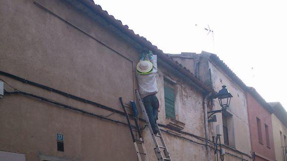 Un eixam d'abelles obliga a tallar el carrer de Sant Domènec