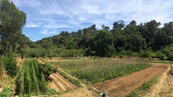 Un dels horts de La Rural