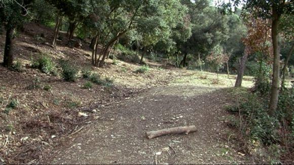 L'ADF demana precaució al bosc davant les conseqüències de la ventada
