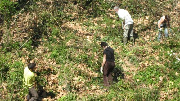 El Mussol elimina plantes invasores de la riera de Vallvidrera