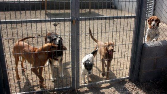 La CUP-PC proposa la construcció d'un refugi municipal d'animals