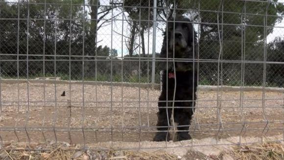 Una cinquantena de gossos, abandonats l'últim any a Sant Cugat