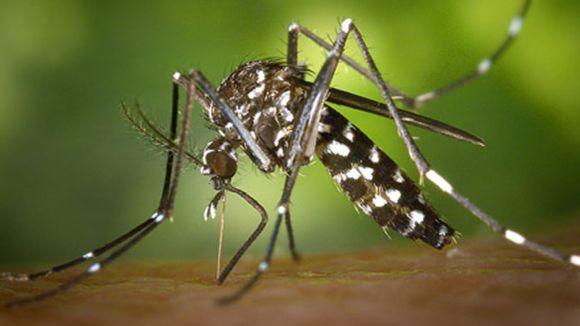 Consells i accions per lluitar contra la proliferació del mosquit tigre