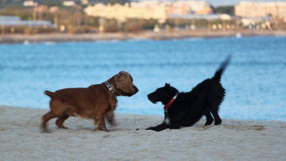 Gossos a la platja / Font: Jordi HD