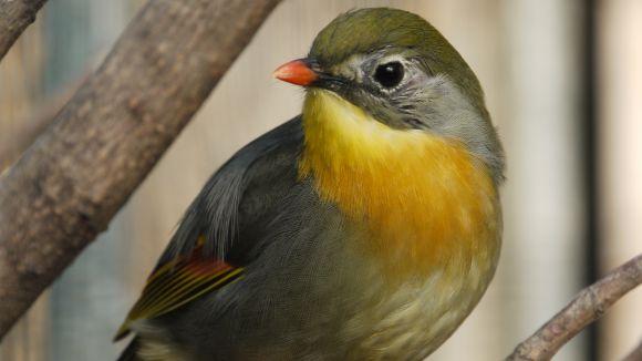L'acció humana, principal causa de la invasió d'espècies forasteres a Sant Cugat