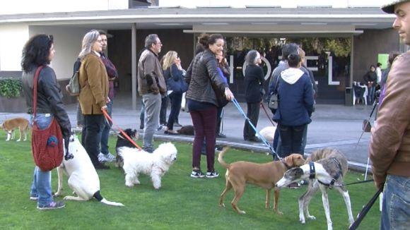 Una vintena de gossos en adopció desfila en la jornada solidària de la PAS