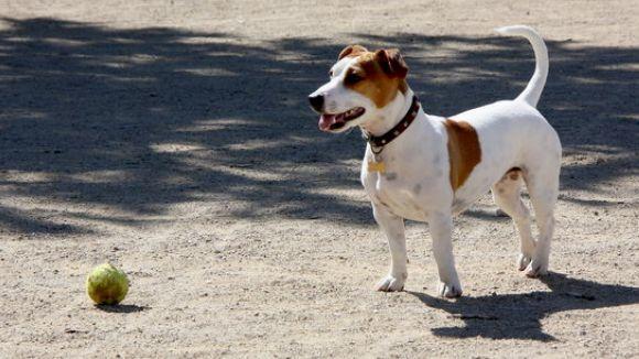 Convergència proposarà al ple ampliar i identificar els establiments que permeten l'entrada d'animals