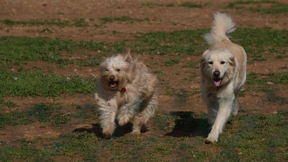La nova ordenança de tinença d'animals arriba amb l'objectiu de millorar la convivència entre el veïnat