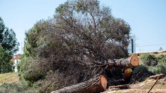 #VolpelleresViu lamenta que l'Ajuntament vulgui construir més equipaments al bosc de Volpelleres