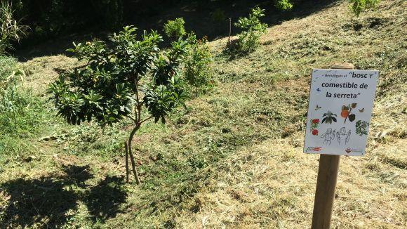 La Serreta suma el bosc comestible al literari i naturalista