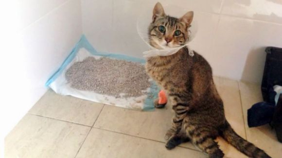 Imatge del gat ferit / Foto: PAS