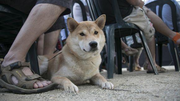 Consells per a la cura dels animals de companyia a l'estiu