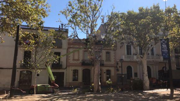 L'Ajuntament ha podat branques en mal estat dels arbres de la plaça de Barcelona