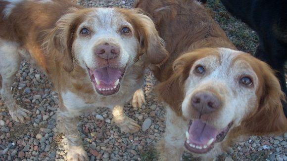 Dos gossos del Cau Amic