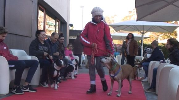 Una quinzena de gossos busquen una nova llar a la desfilada de la PAS