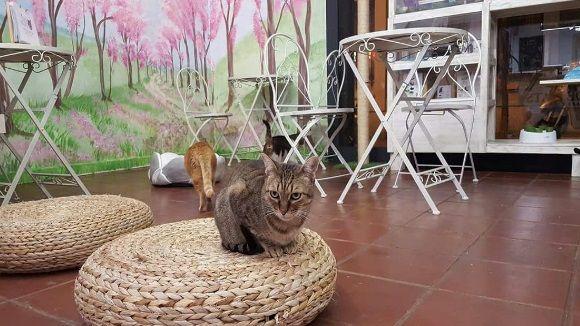 Els clients comparteixen l'espai amb els gats