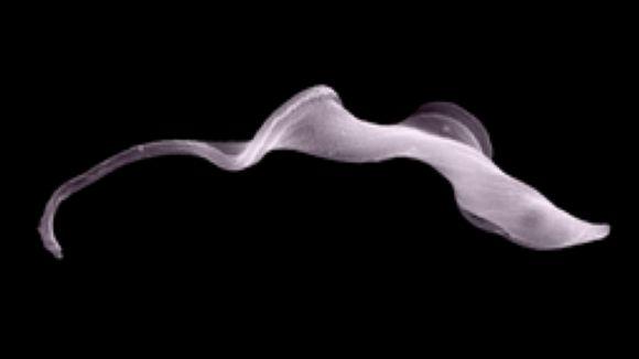 'El Pou' comença una sèrie d'entrevistes al Sincrotró Alba amb una investigació sobre la malaltia de la son