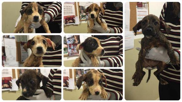 Es busquen famílies adoptives per a set cadells trobats aquest dimecres a la zona del Pi d'en Xandri