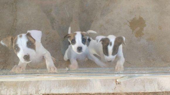 Quatre dels set cadells abandonats al Pi d'en Xandri ja tenen família d'adopció