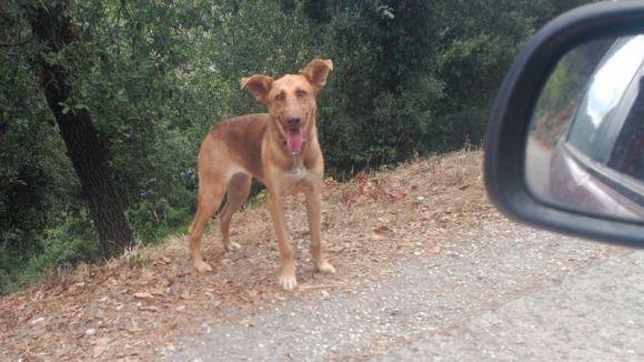 Un gos perdut a La Floresta / Foto: facebook perros de La Floresta y +