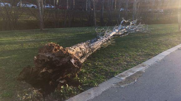 El vent trenca una finestra i fa caure tres arbres de grans dimensions a Sant Cugat i Valldoreix