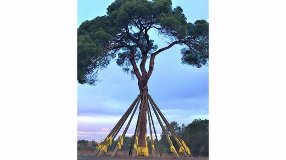 L'ANJI col·loca 1.500 llaços grocs al Pi d'en Xandri