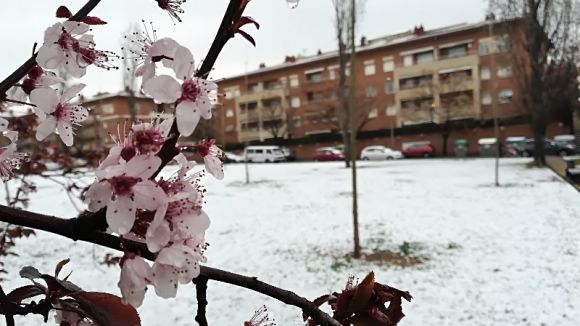 Sant Cugat ha donat la benvinguda a la primavera amb la segona nevada de l'any