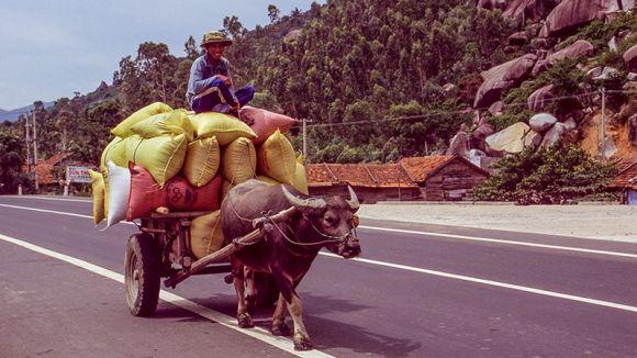 Una de les imatges de l'exposició / Foto: Fundació Cabanas