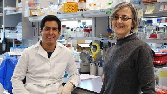 Un estudi liderat per una santcugatenca demostra l'efecte del rellotge circadiari en la divisió cel·lular de les plantes