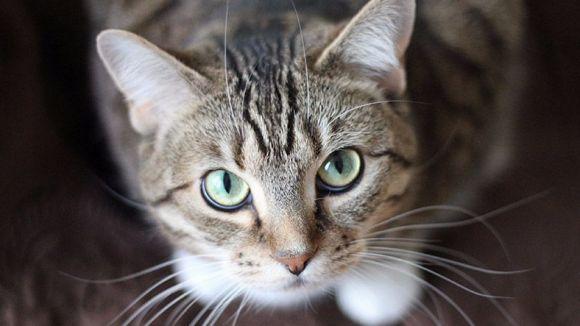 El Cau Amic i l'EMD de Valldoreix signen un conveni per controlar les colònies de gats
