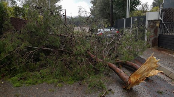 La pluja provoca la caiguda de dos arbres a Sant Cugat