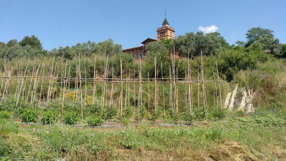 La recuperació de la pagesia, una via per prevenir incendis i mantenir el paisatge a Collserola