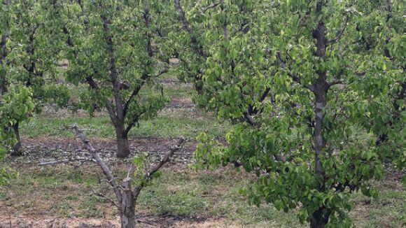 Les plagues afecten les plantes i arbres fruiters / Foto: ACN
