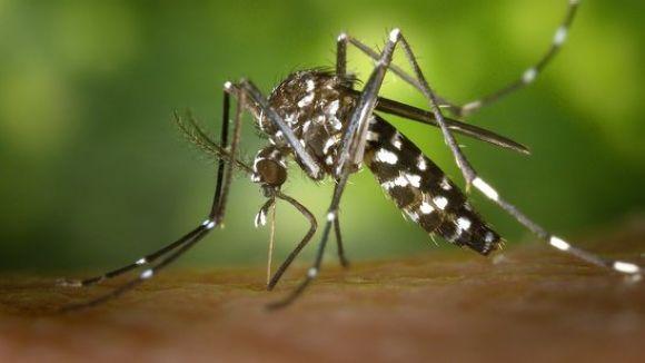 Consells per combatre la propagació i les picades del mosquit tigre