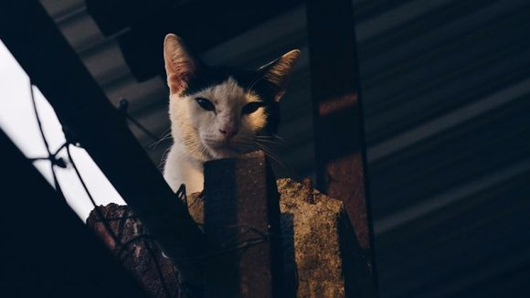 Imatge d'arxiu / Foto: Plataforma Animalista de Sant Cugat (PAS)