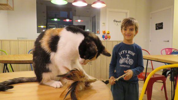 Obre a Sant Cugat el QGats Cat Cafè, el primer bar de gats de la comarca