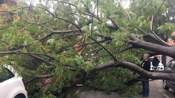 Un arbre cau sobre quatre vehicles a Mira-sol
