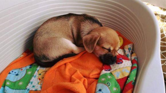 Les mantes han d'ajudar a passar el fred als animals de les protectores / Foto: Facebook Adopta'ns