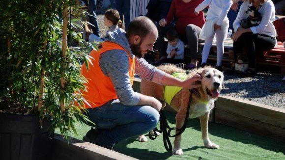 Els gossos desfilaran dues vegades / Foto: Cau Amic