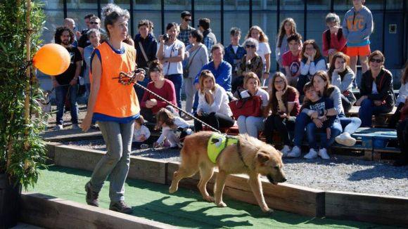 Una quarantena de gossos i gats esperen adoptant a la Jornada d'Adopcions d'El Cau Amic