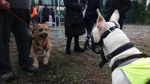 Els gossos grans i els perillosos, els que més adopcions i acolliments necessiten / Foto: Cugat.cat