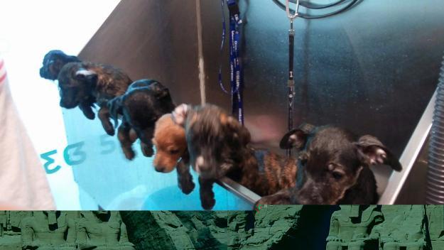 Els gossos abandonats a l'agost a Sant Cugat en el moment de ser atesos al veterinari / Foto: El Cau Amic