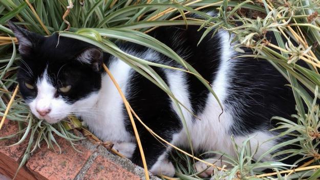 Els gats de colònia són més dificils d'ajudar des de les protectores i tancats / Foto: El Cau Amic