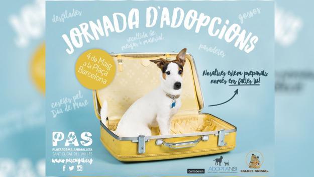 Jornada d'adopcions de gats i gossos
