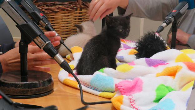 Què fer quan adoptem un nou gat?