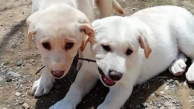 Dos dels cadells que esperen a ser adoptats al Cau Amic / Foto: El Cau Amic