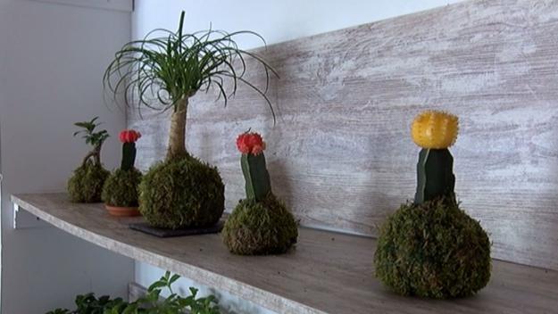 Les plantes kokedama ja han arribat a Sant Cugat