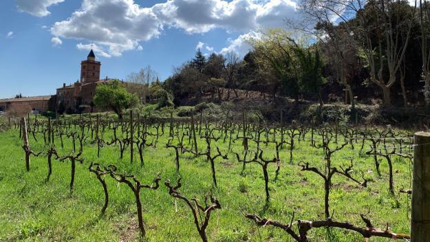 La vinya torna a arrelar a Sant Cugat